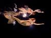 austrian-mermaids-18