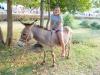 posedarje_tradicionalna_48_-trka_magaraca_27_07_19-10-of-298