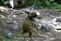 Reporteri-Borbe-pasa-2