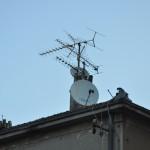 Antene (Foto: Žeminea Čotrić)