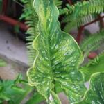 Biljke (Foto: Ivan Katalinić)