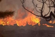 76-GODIŠNJAK ZARADIO KAZNENU PRIJAVU Spaljivao granje u masliniku, pa skoro zapalio selo