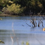 Lika, voda (Foto: Ivan Katalinić)