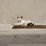 Mačke (Foto: Ivan Katalinić)