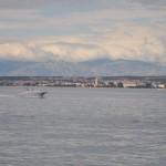 Panorama Zadra (Foto Žeminea Čotrić)