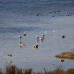 Ptice (Foto: Ivan Katalinić)