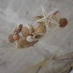 Školjke (Foto: Žeminea Čotrić)