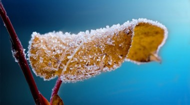frosted-leaf-branch-frost-64227