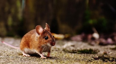 mouse-1708347_1280